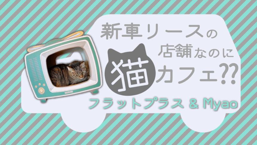佐賀に新しく猫カフェがOPEN!!